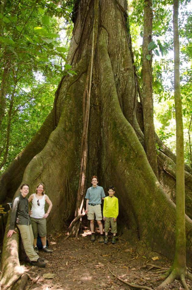Kapok Tree-Arenal 2015-4
