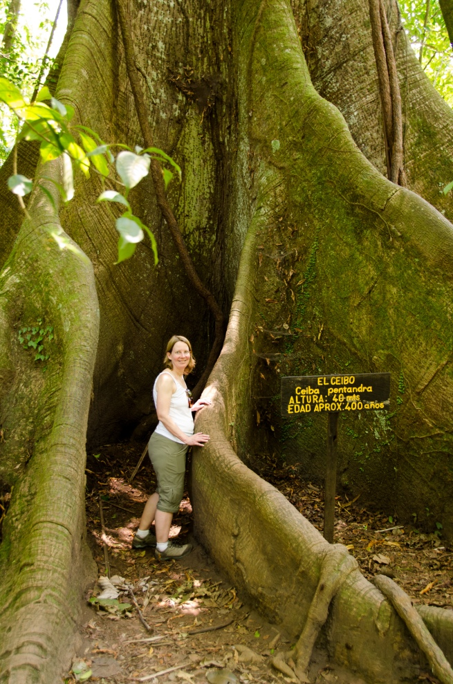 Kapok Tree-Arenal 2015-7